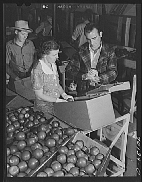 WPA (Work Projects Administration) instructor demonstrates proper method of wrapping apple at apple packing school at FSA (Farm Security Administration)