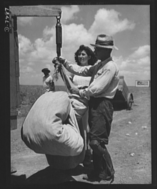 Agricultural. Mexican cotton pickers. Mexican workers weigh precious sacks of cotton prior to shipment to the ginning mills. Because of the U.S. agricultural labor shortage hundreds of these Good Neighbors gave farmers of Corpus Christi, Texas a hand in the harvesting of this vital war crop
