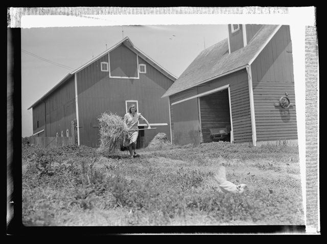 Agriculture. Women on farms. Induction of much of America's manpower into the armed forces brings increased activity to U.S. farmer's wives. One of these, Mrs. Harold Sontag of Maple Park, Illinois, finds the day all too short for the completion of her many chores. With cattle, horses, and poultry to tend, there are very few minutes for repose and relaxation in Mrs. Sontag's war-conditioned life
