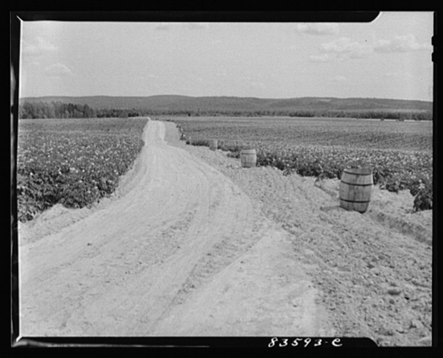 Aroostook County, Maine. Potato fields once owned by Belonie Dufour, and now owned by the Berce and Clark company of New York