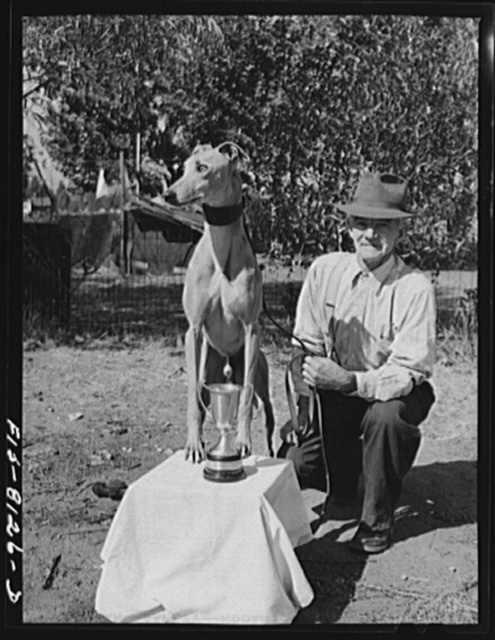 Butte, Montana. John D. Eddy, former miner, now living at 3030 Amherst Street, with one of the greyhounds, Petaluma Gold, which he trained for local greyhound racing track. Mr. Eddy was born in Saint Just, near Carn, Cornwall, England. He came to the U.S. in 1900 and has been back and forth to Cornwall several times. He has trained dogs many years, and at one time owned a kennel of thirty dogs and also operated a race track near Butte. Racing and coursing greyhounds is one of the Welsh sports which Welshmen have continued in Butte