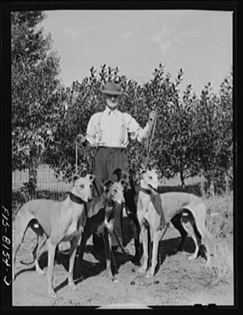 Butte, Montana. John D. Eddy, former miner, now living at 3030 Amherst Street, with one of the greyhounds, Petaluma Gold, which he trained for local greyhound racing track. Mr. Eddy was born in Saint Just, near Carn, Cornwall, England. He came to the U.S. in 1900 and has been back and forth to Cornwall several times. He has trained dogs many years and at one time owned a kennel of thirty dogs and also operated a race track near Butte. Racing and coursing greyhounds is one of Welsh sports which Welshmen have continued in Butte