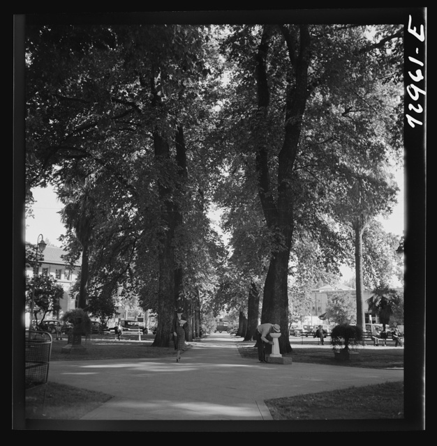 Chico, California. City park