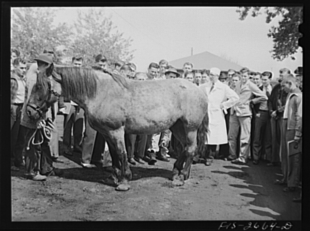 Class at the veterinary school at Iowa State College diagnosing illness of a horse brought in by a farmer, Ames, Iowa