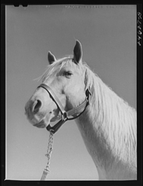 College Station, Texas. Texas Agricultural and Mechanical College. Horse