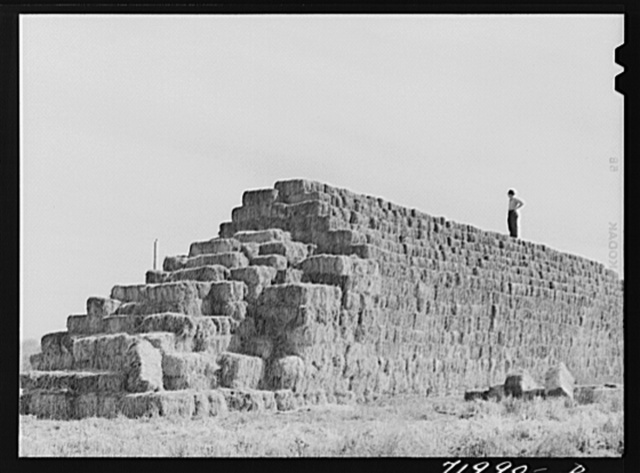 Coolidge, Pinal County, Arizona. Casa Grande Farms, FSA (Farm Security Administration) project. Baled hay