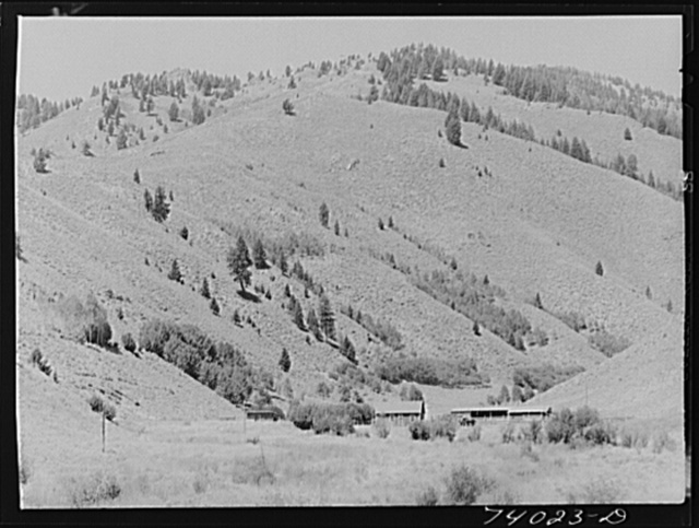 Custer County, Idaho. Cattle ranch on the Salmon River
