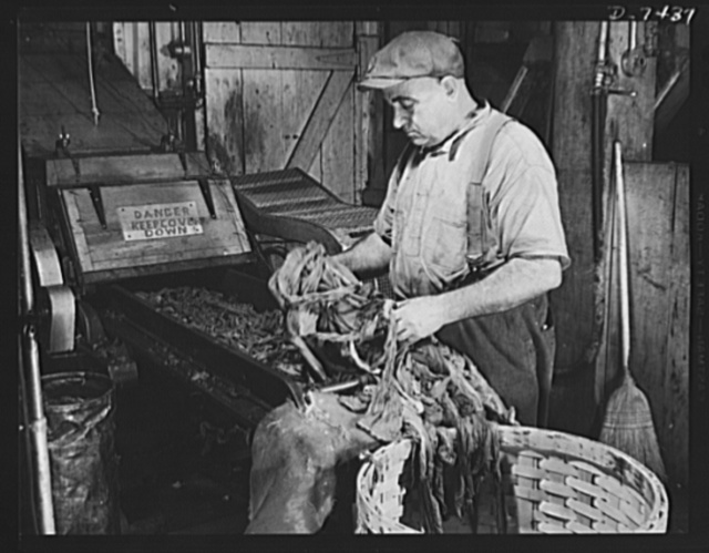 Discarded stockings go to war. Old silk stockings, after having cotton parts removed, are put into a picking tender which shreads the material. Here, Duphis Duchaine, age 67, with four sons in the service, feeds the machine