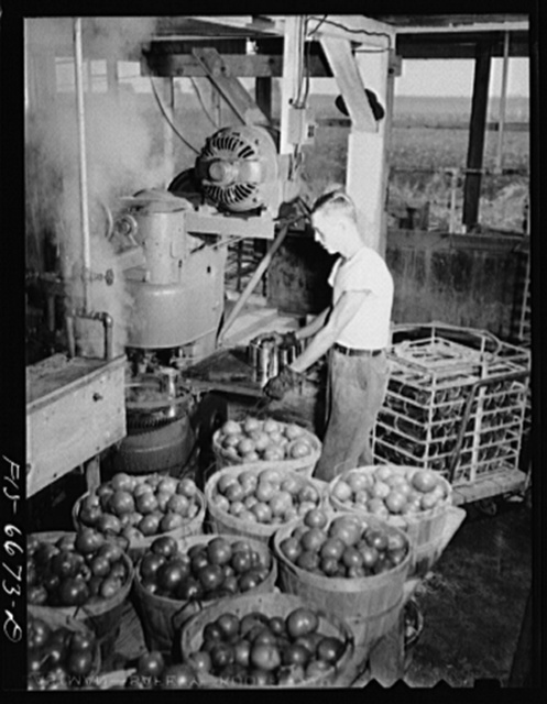 Dunklin County, Missouri. Canning tomatoes with U.S. Rural Electrification Administration (REA) power