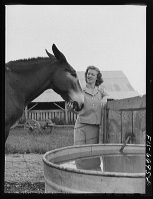 Dunklin County, Missouri. Daughter of a U.S. Rural Electrification Administration (REA) cooperative member with a mule