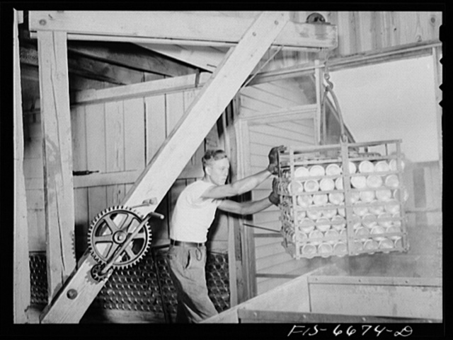 Dunklin County, Missouri. Tomatoes at a cannery operated by U.S. Rural Electrification Administration (REA) power