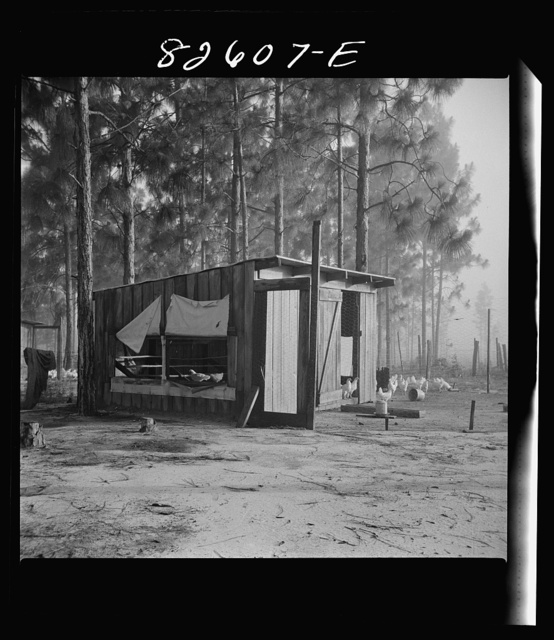 Escambia Farms, Florida. The even climate of Florida makes poultry houses easy to construct. Maximum ventilation is the only requisite