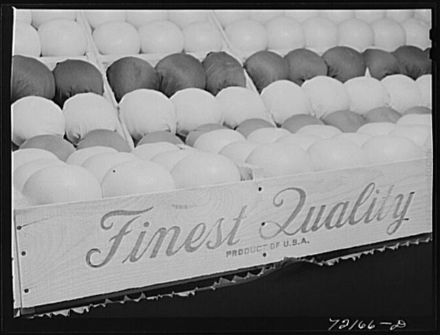 Exhibit of grapefruit at the Imperial County Fair, California
