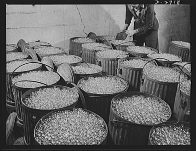 Fiberglass manufacture, Owens-Corning, Toledo, Ohio. Millions of carefully inspected glass marbles, ready for remelting and forming into glass filaments. A single marble can be drawn into a continuous filament so fine that it would reach from New York to Philadelphia. More than one hundred filaments must be drawn together to make the finest workable strand