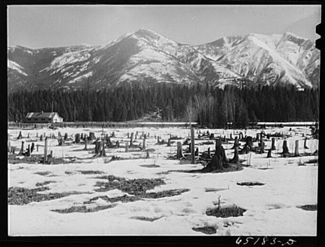 Flathead Valley special area project, Montana. Uncleared land, typical of Flathead Valley, where farmers from the drought area of eastern Montana and Dakotas settled in 1936-1937