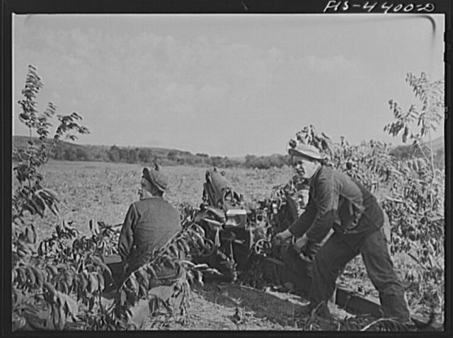 Fort Riley, Kansas. Artillery practice. Firing howitzer 75 mm gun