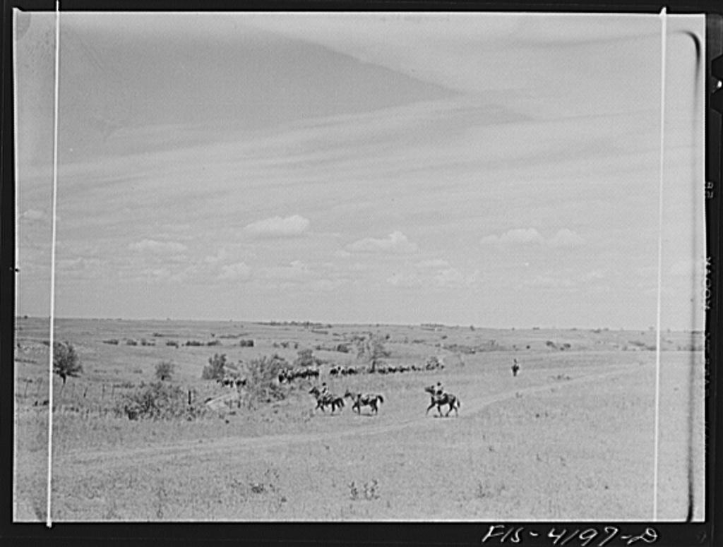 Fort Riley, Kansas. Cavalry coming across country during a field problem