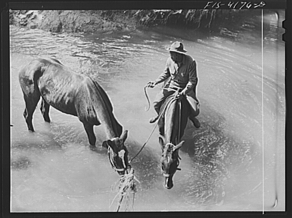 Fort Riley, Kansas. Watering the horses during a field problem of the cavalry