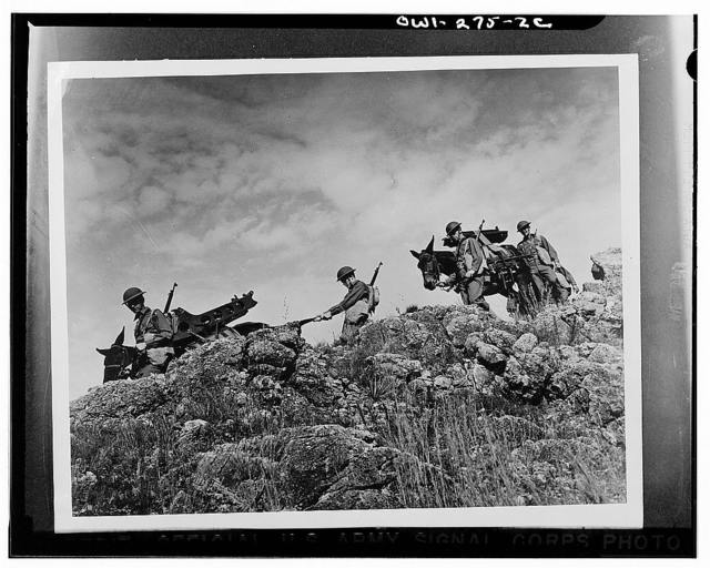 Fort Sill, Oklahoma. Muleteers and cannoneers rolled in one, the men of Battery C, 26th Battalion, Field Artillery Replacement Training Center, consider the most impossible terrain part of the day's work. With their guns and auxiliary equipment slung on the backs of army mules, they break through thick forests, ford streams, and scale mountain ranges. Their job is to go where mechanized and horse-drawn artillery can't go