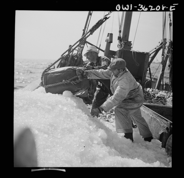 """Gloucester, Massachusetts. Crew members throw overboard excess ice from """"Old Glory's"""" hold. Fishermen allow a proportion of one ton of ice to three tons of fish. When the catch is unusally large, as on this trip, some ice is removed to make room for the fish"""