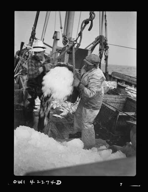 "Gloucester, Massachusetts. Crew members throw overboard excess ice from ""Old Glory's"" hold. Fishermen allow a proportion of one ton of ice to three tons of fish. When the catch is unusually large, as on this trip, some ice is removed to make room for the fish"