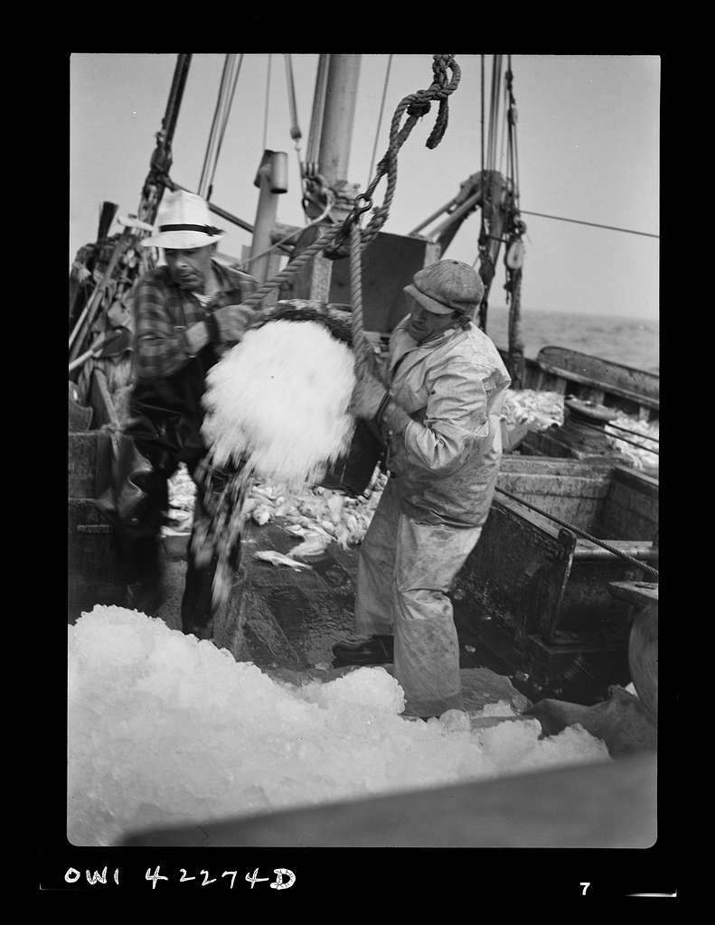 """Gloucester, Massachusetts. Crew members throw overboard excess ice from """"Old Glory's"""" hold. Fishermen allow a proportion of one ton of ice to three tons of fish. When the catch is unusually large, as on this trip, some ice is removed to make room for the fish"""