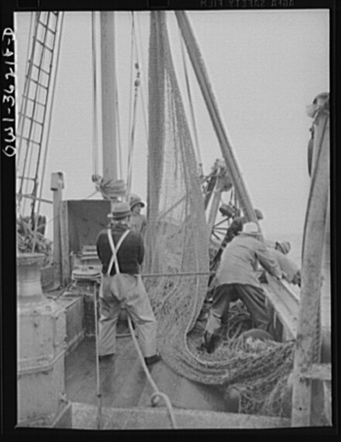 """Gloucester, Massachusetts. The crew of """"Old Glory"""" pulls up a sizeable haul of fish. Almost all of this catch will be filleted and frozen for military and lend-lease shipment. Of the total packs in the United States, sixty percent of the salmon and eighty percent of the sardine and macherel are consumed by the armed forces here and abroad"""