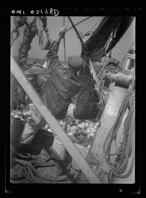 """Gloucester, Massachusetts. The crew of """"Old Glory"""" pulls up a sizeable haul of fish. Almost all of this catch will be filleted and frozen for military and lend-lease shipment. Of the total packs in the United States, 60 percent of the salmon and 80 percent of the sardine and mackerel are consumed by the armed forces here and abroad"""