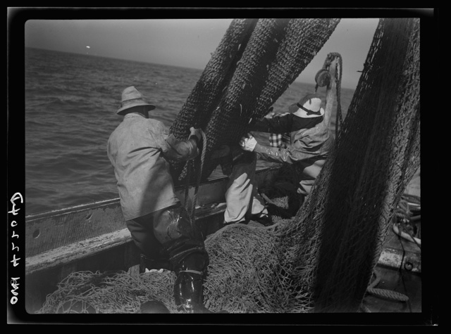 "Gloucester, Massachusetts. The crew of ""Old Glory""pulls up a sizeable haul of fish. Almost all of this catch will be filleted and frozen for military and lend-lease shipment. Of the total packs in the United States, 60 percent of the salmon and 80 percent of the sardine and mackerel are consumed by the armed forces here and abroad"