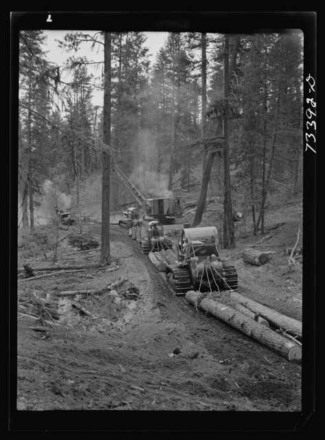 Grant County, Oregon. Malheur National Forest. Caterpillar tractors snaking logs to the place where they are loaded onto trucks