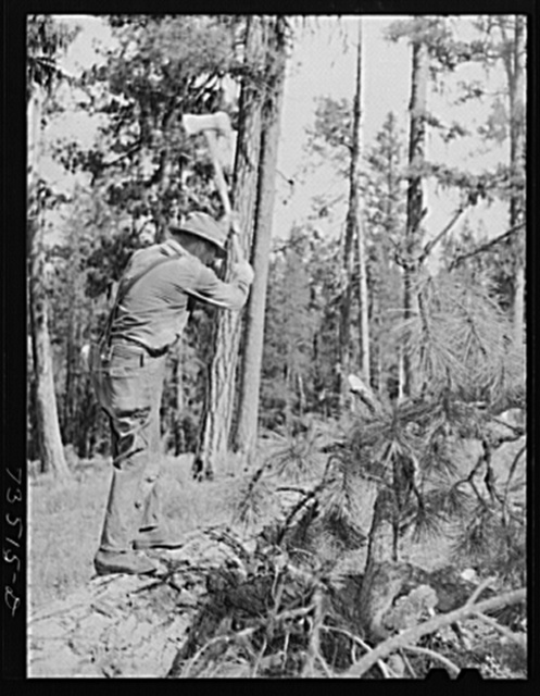 Grant County, Oregon. Malheur National Forest. Chopping branches from falled tree