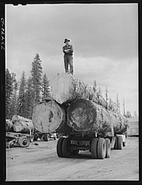 Grant County, Oregon. Malheur National Forest. Lumberjack on truckload of logs