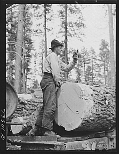 Grant County, Oregon. Malheur National Forest. Lumberjack with logs. He is toploader and is signaling his men which log to load next
