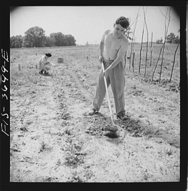 Greenbelt, Maryland. Tenants cultivating their garden plot. Each tenant receives a fifty foot plot. It costs him a dollar to have it plowed, and he must then take care of it himself, or make some arrangement with a neighbor. Plots are situated outside the housing zone