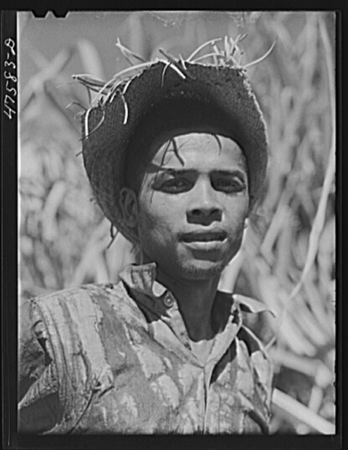 Guanica, Puerto Rico (vicinity). Farm laborer employed in cutting sugar cane at one dollar and fifty-one cents per day