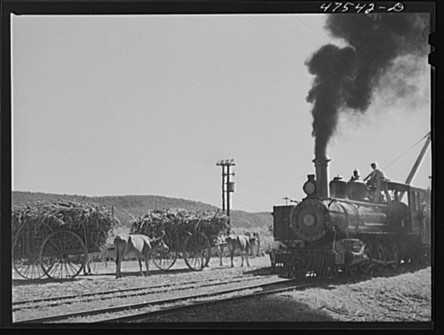 Guanica, Puerto Rico (vicinity). Freight train used in hauling cane to the sugar mills from loading stations