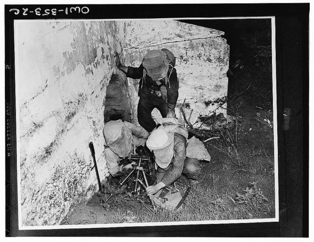 Gun crew setting up a small trench mortar in a concealed position. The soldiers wear netting over their helmets to protect their faces from the insects which abound in these tropical areas of the British West Indies