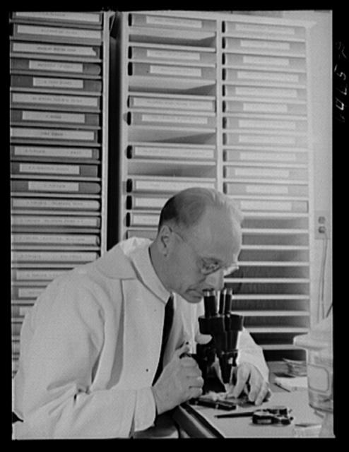 Hamilton, Montana. Rocky Mountain Institute. Dr. G.E. Davis examining living tick through microscope
