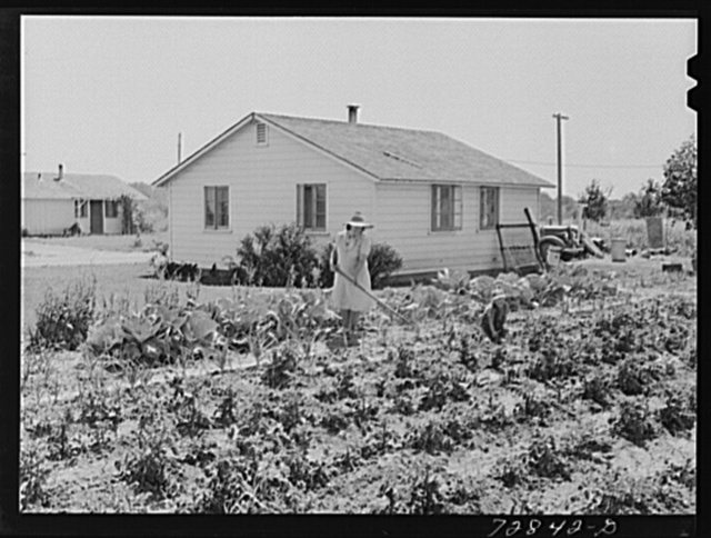 Home and garden of Mr. and Mrs. Ellis Shadd. FSA (Farm Security Administration) farm workers community. Gridley, California