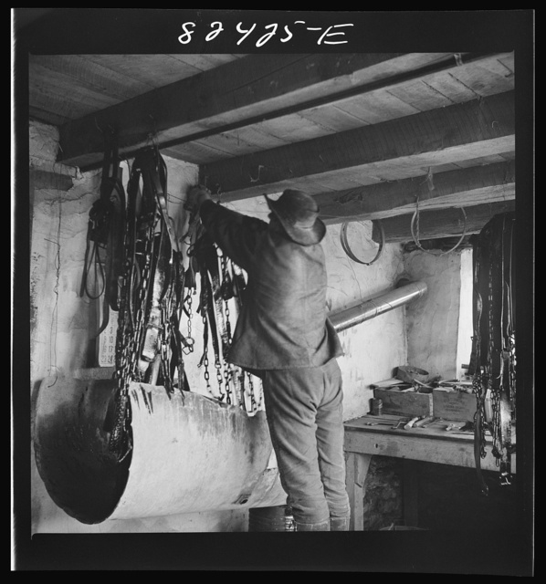 Honey Brook, Pennsylvania (vicinity). Amish boy on Zook farm hanging up harness after dipping it in oil in readiness for spring planting