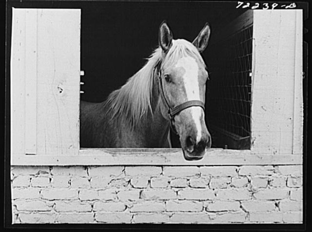 Horse. Imperial County Fair, California