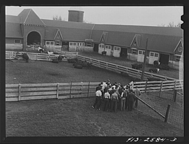 Iowa State College. Ames, Iowa. Animal husbandry class