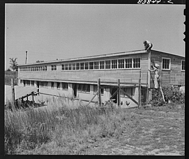 Jewett City, Connecticut (vicinity). Poultry house built by Estonian farmer on loan from FSA (Farm Security Administration)