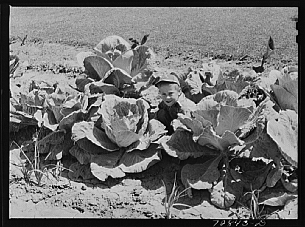 Jimmy Lee Shadd in his mother's cabbage patch at the FSA (Farm Security Administration) farm workers community. Gridley, California