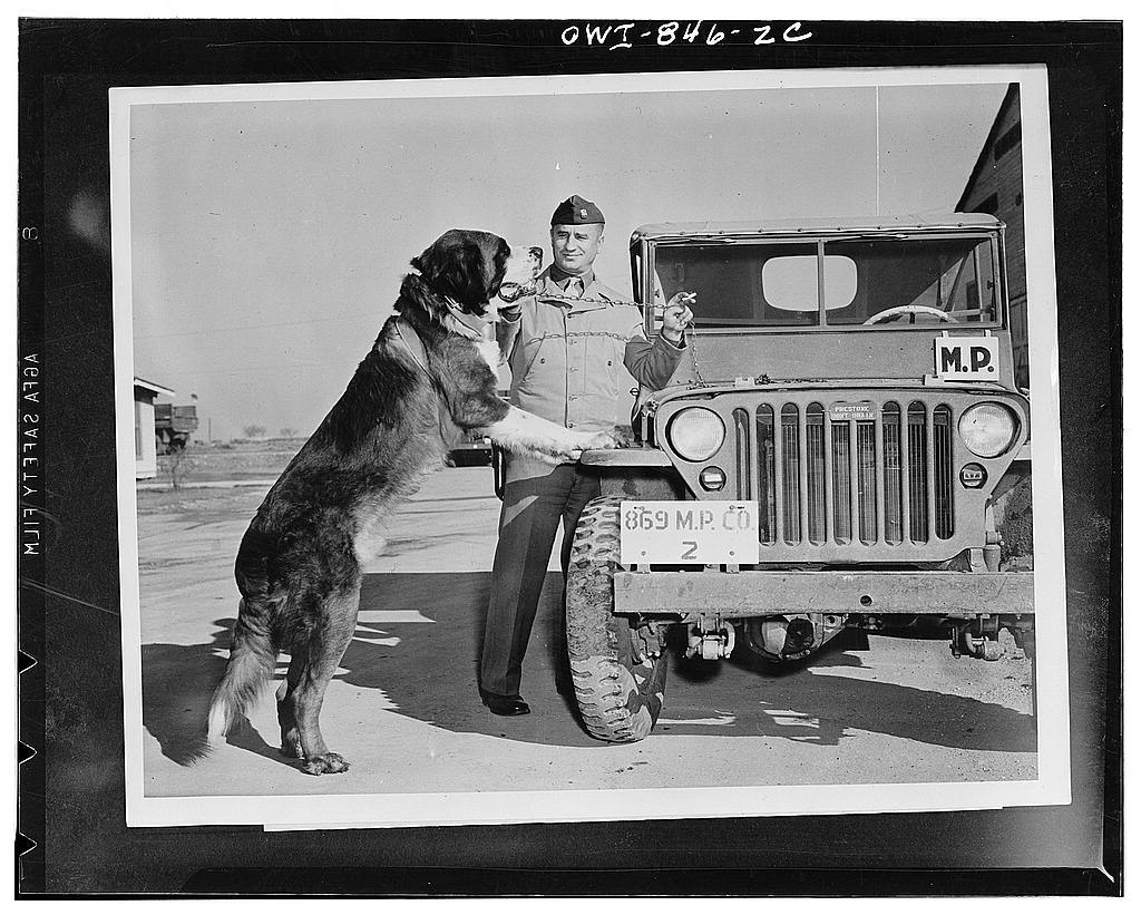 """Kelly Field, Texas. """"Julius Caesar,"""" mascot of the Military Police. He boasts three ribbons and a pedigree."""