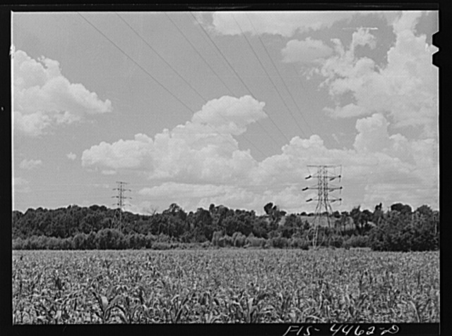 Lauderdale County, Alabama (Tennessee Valley Authority (TVA)). Transmission lines in a cornfield
