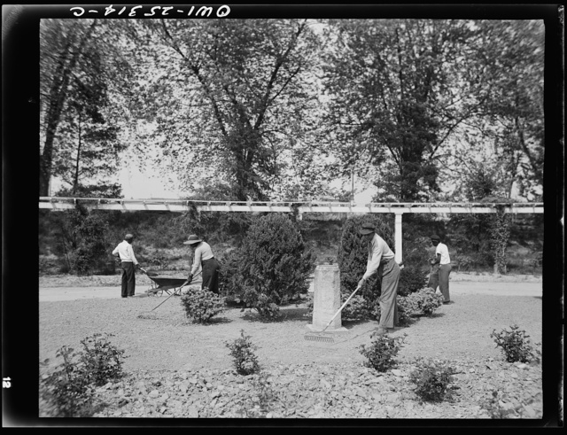 Manpower storage is so acute in Washington, D.C. that for the first time in history, Negro women are now employed as gardners in the rose garden of the Botanical Gardens--one of the beauty spots of the nation's capital