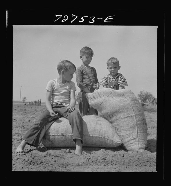 Merced County, California. Farm boys with sacks of seed peanuts