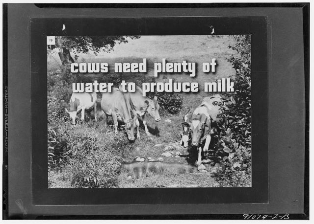 More milk for victory, a filmstrip prepared by the FSA (Farm Security Administration) in September, 1942. Frame number nineteen