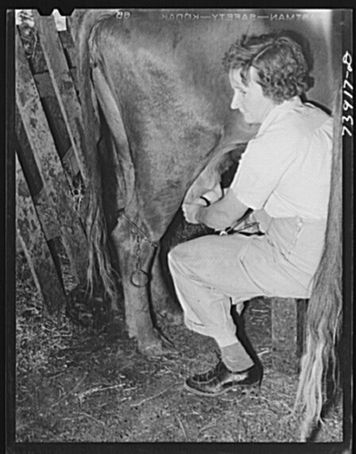 Ola, Idaho. Wife of a member of the Ola self-help cooperative milking a cow. All members of the cooperative have cows, chickens, and gardens